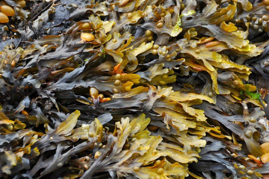 Aux algues, citoyens