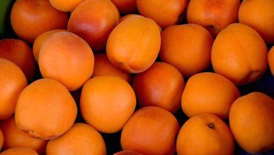 Les abricots bonne mine