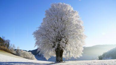 l'ordonnance de l'hiver