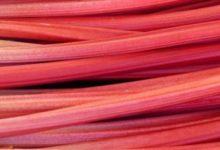 Rhubarbe, la racine barbare