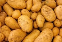 Produits et recettes de saison : la pomme de terre